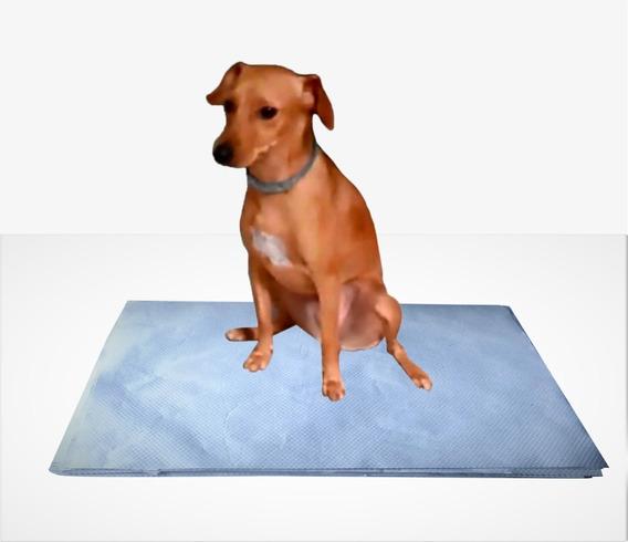 500 Uni Tapete De Papel Jornal Pet Para Cachorro, Top+brinde
