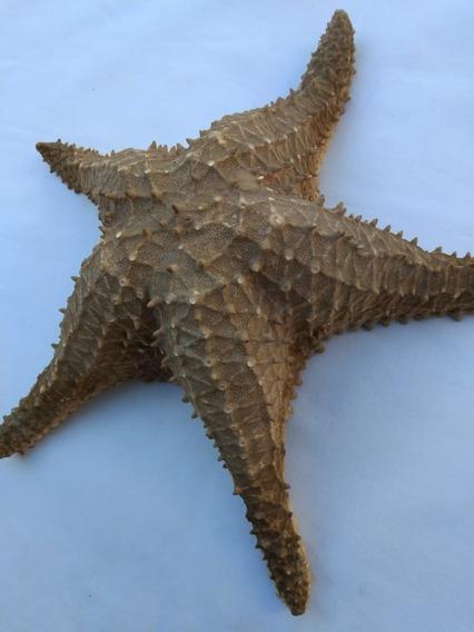 Estrella De Mar Grande
