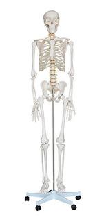 Esqueleto Humano 1.70cm Haste Suporte Rodas Anatomia Humana