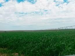 Terreno De Riego Barato En Guasave