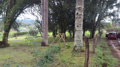Área Rural 10.000m² Bosques, Arroio, Cercada