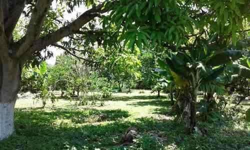Venta De Terreno Con Huerto Y Árboles Frutales En Yautepec
