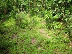 Fazenda A Venda Para Pecuária Em Natividade - To - 977