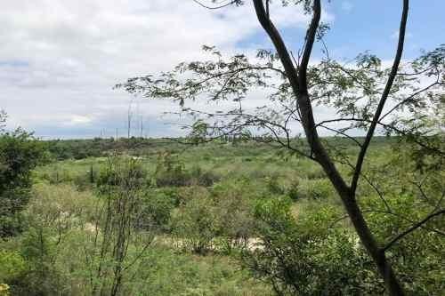 Terrenos En Venta En Los Sabinos, Allende