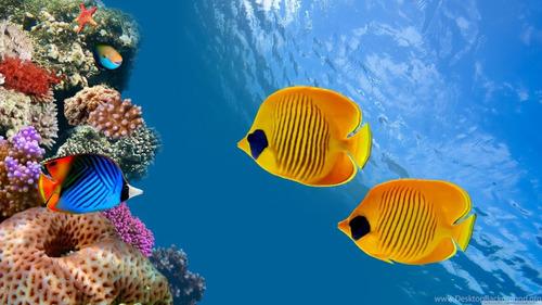 Painel Adesivo Decoração Aquário Fundo Mar Oceano Peixes Hd