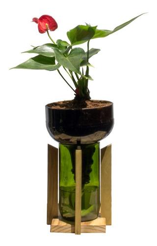 Anturio Little Plant 27 Con Soporte, Maceta Autorregante