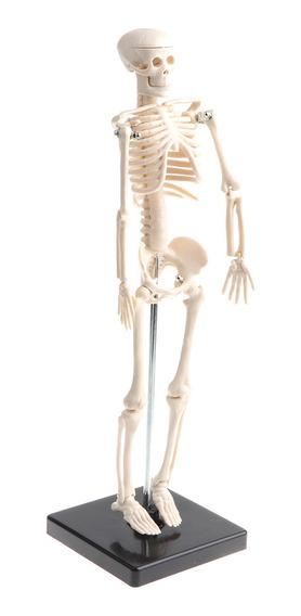 42cm Modelo De Esqueleto De Cuerpo Humano De Niños Equipo