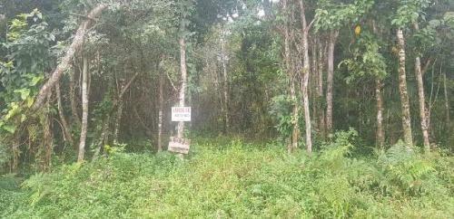 Terreno Medindo 250 Mts No Gaivota Em Itanhaém - 3519 | Npc