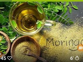 Promoção Moringa Oleifera 10 Mudas 120 Frete Gratis