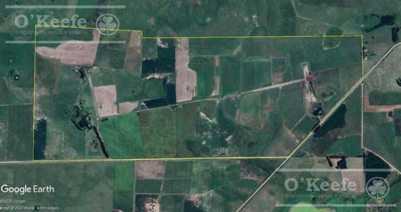 Campo Mixto 525 Has - Sobre Asfalto - Armado Y Con Mejoras - Loma Verde