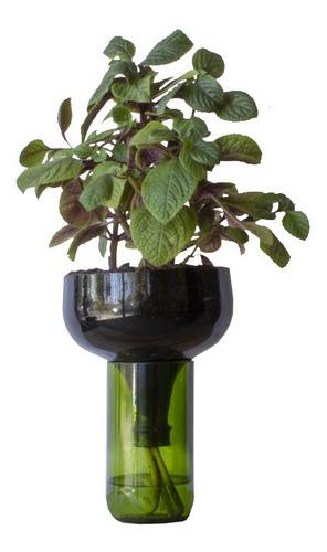 Dólar Negro Little Plant 32 Sin Soporte, Maceta Autorregante