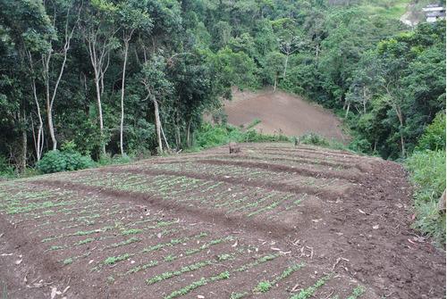 Imagen 1 de 8 de Terreno Carrizal - Sector La Urupagua (castillos Del Bosque Llano Alto)