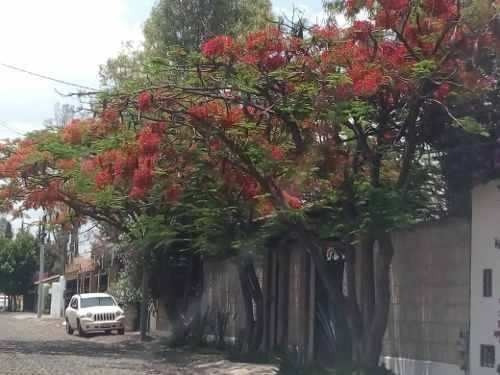 Preciosa Casa En Jurica Casi Toda En Una Planta
