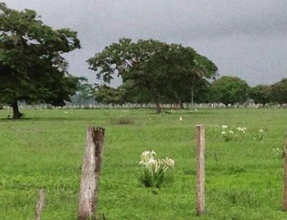 Venta Finca Productiva Para Agricultura Y Ganadería Meb