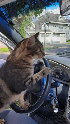 Aulas Particulares De Direção Veicular Automotor - Cat. B