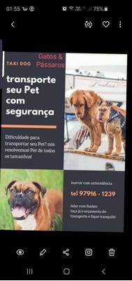 Taxi Dog Rj