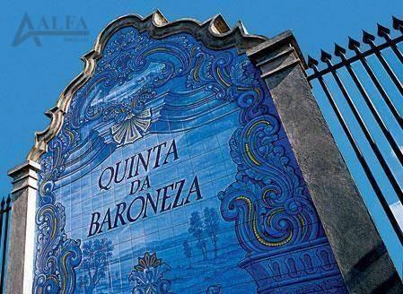Imagem 1 de 5 de ** Quinta Da Baroneza - Oportunidade Única - Maravilhoso Terreno Plano De 3.080,00 M² No Melhor Condomínio De Campo Do Brasil ** - Te0005