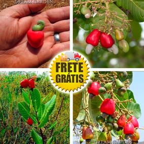Caju Anão Do Cerrado Precoce Sementes De Fruta Para Mudas
