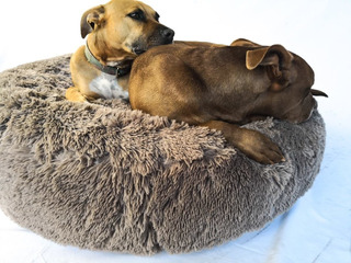 Cama Colchon Nido Para Mascotas De Piel Talle L