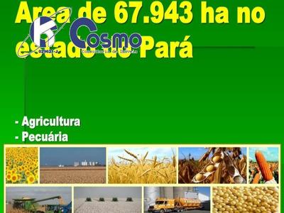 Fazenda, A Venda, Em Camuru Do Norte - Pa - Fa00050 - 33334652