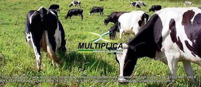 Fazenda Para Leite Com Toda Estrutura Em Araguari Mg - 144