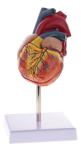 Imagen 1 de 4 de 1: 1 Estatua De Corazón Humano Herramienta De Aprendizaje