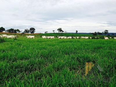 Rural Fazenda - Fz20-v