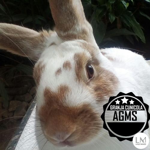 Imagen 1 de 9 de Conejos Excelente Genetica Pdf
