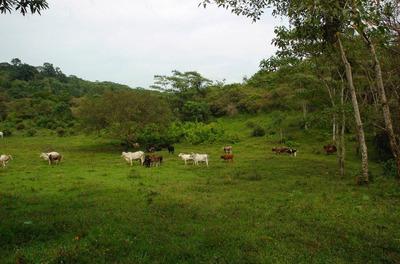 Rancho En Venta Para Producción, O Eco Turismo De Aventura.