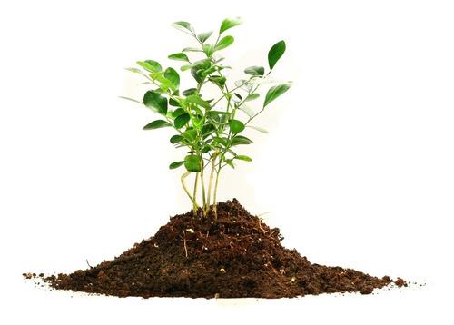 Sustrato Tierra Fertil Sin Agroquimicos Abono Resaca Huerta