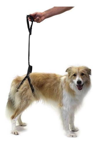 Imagen 1 de 4 de Arnes Para Perros Con Displasia Acolchado Ortopedia Canina