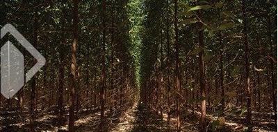 Chacara/fazenda/sitio - Centro - Ref: 241199 - V-241199