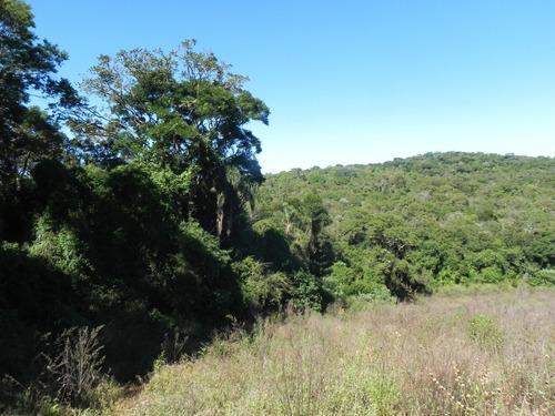 Ig Lotes Em Área Verde - Residencial Caminhos Do Sol