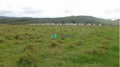 Fazenda 1242 Ha Pratinha (mg) - Cod: Mta660