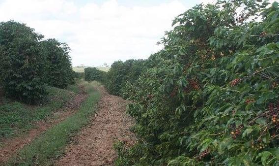 Fazenda A Venda - 470 Hectares - Santo Antônio Do Amparo (mg) - 746