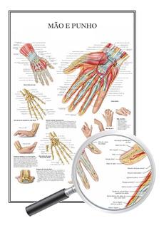 Mapa Anatomia Humana Educação Física, Mão E Punho 60x90 Cm