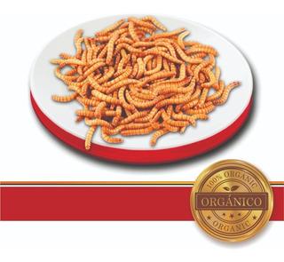 Tenebrios Alimento Vivo 1,000 Piezas ((( Envio Gratis )))