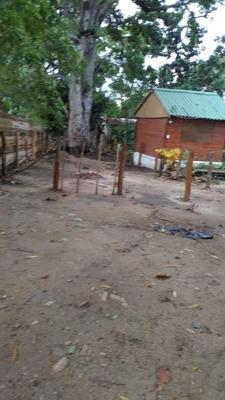 Duoone Projects: La Casa Del Arbol,palomino 3208715638