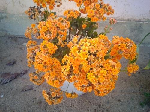 Imagem 1 de 1 de Mudas De Flores