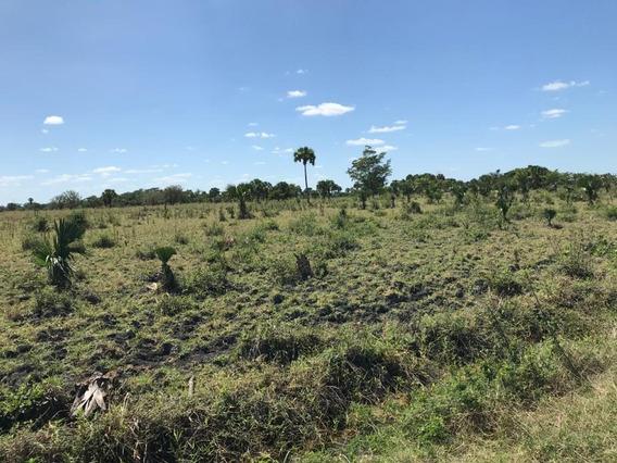 Terrenos En Palizada De 400 Y 500 Hectáreas! Inversión