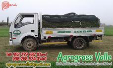 Agrograss Valle - Venta E Instalación De Grass Natural