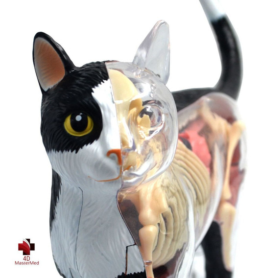 Anatomia Do Gato - 4d Master