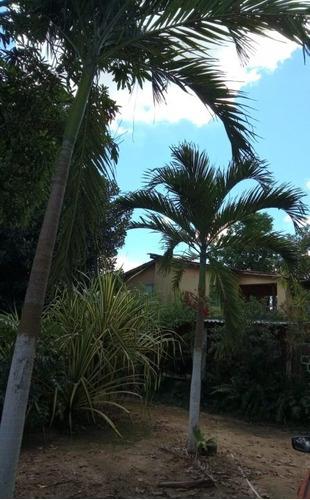 Imagem 1 de 20 de Casa Em Borralho, Camaragibe/pe De 100m² 3 Quartos À Venda Por R$ 360.000,00 - Ca1041562