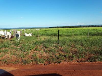 Fazenda A Venda Em Sonora - Ms (pecuária) - 855