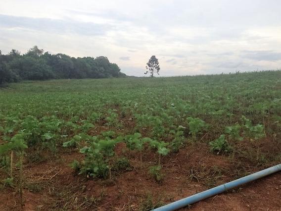 Espetacular Sitio Para Plantio Em Mogi Das Cruzes!!!