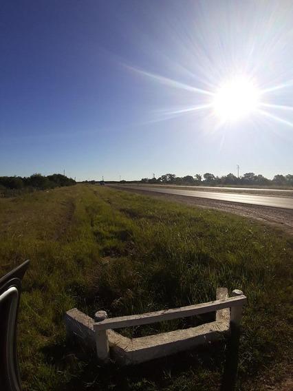 Venta Campo Chajari Entre Rios 399 Has Sobre Ruta 14