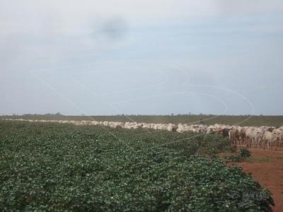 Fazenda Para Venda : Ref:040190.01 - 040190.01