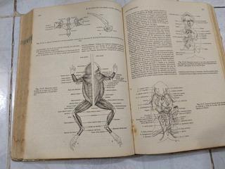 Libro Biología / Claudia A. Villee