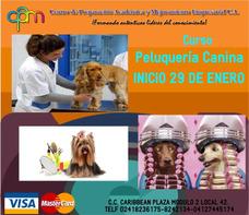 Cursos Peluquería Canina, Ingles, Técnico Uñas, Masajista