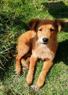 Cachorrita De 5 Meses Dono En Adopción En Quito
